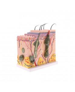 3D odos struktūros modelis